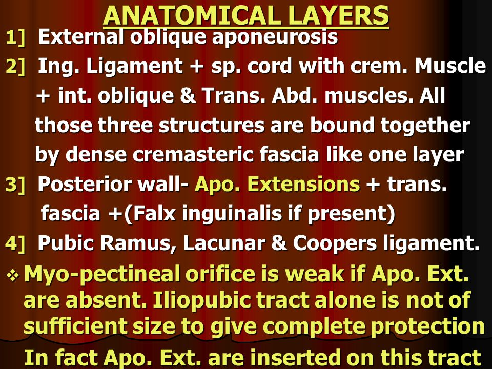 ANATOMICAL LAYERS 1] External oblique aponeurosis. 2] Ing. Ligament + sp. cord with crem. Muscle.